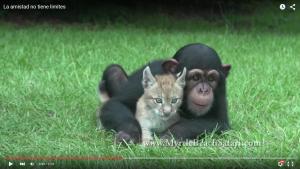 ChimpancéLince