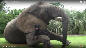 ElefantePerro